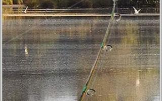 Фидерная ловля для начинающих — как ловить, правильная оснастка и техника заброса