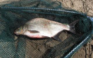 Как правильно рыбачить на удочку