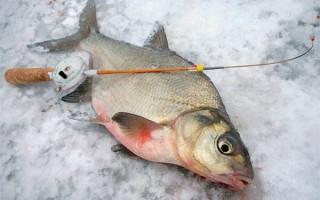 Ловля леща на зимнюю поплавочную удочку