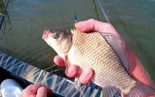 Когда начинает клевать карась — рыбалка весной