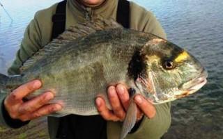 ЛОВЛЯ МОРСКОГО КАРАСЯ (ЛАСКИРЯ) » Все о рыбе и рыбалке