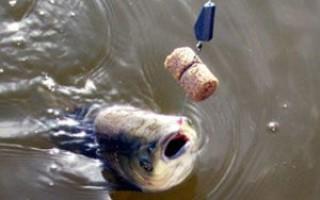 Ловля толстолобика — на технопланктон, снасть убийца толстолобика, донку
