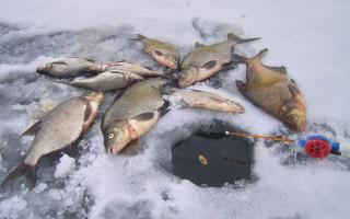 Удочка для зимней ловли леща — все секреты оснастки