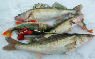 Блесны на судака зимой — ловля, оснастка, рабочие приманки