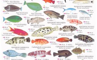 Какие виды рыб бывают