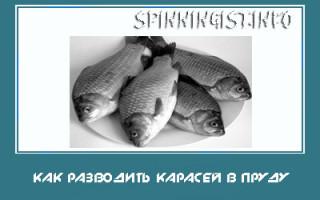 Разведение рыбы в пруду на даче